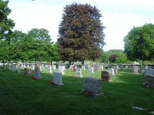 Lines of headstones and trees