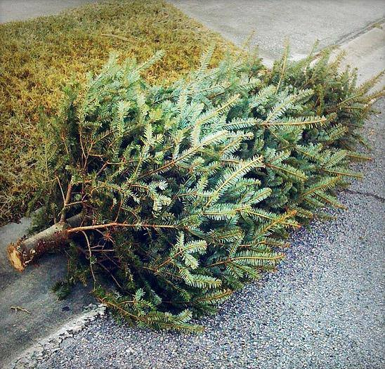 Christmas Tree Curb Pickup